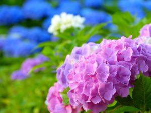 仙台で梅雨も心地よく暮らす家づくり